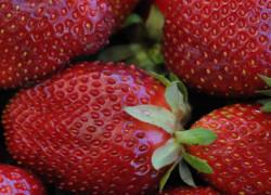 strawberriesweb