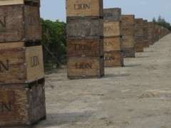 Raisin boxes