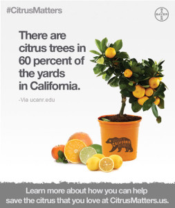 Residential Citrus Trees