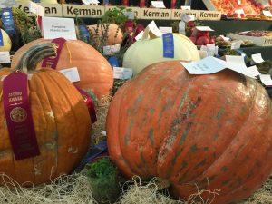 Big Fresno Fair Pumpkins