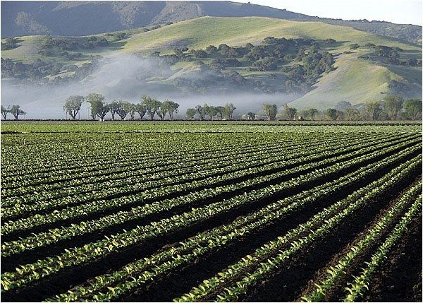 CAPCA's Terry Stark: Biopesticides More Mainstream