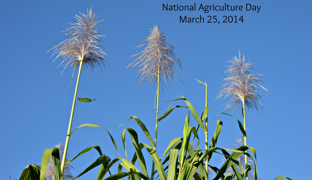 FSA Celebrates American Agriculture Producers on National Ag Day