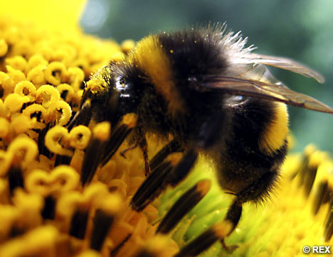 Governor Brown Commemorates California Pollinator Week