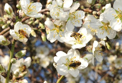 Pollinator Survey Shows Better Results but Significant Losses, Plus USDA Fall Summit on Bee Nutrition and Forage