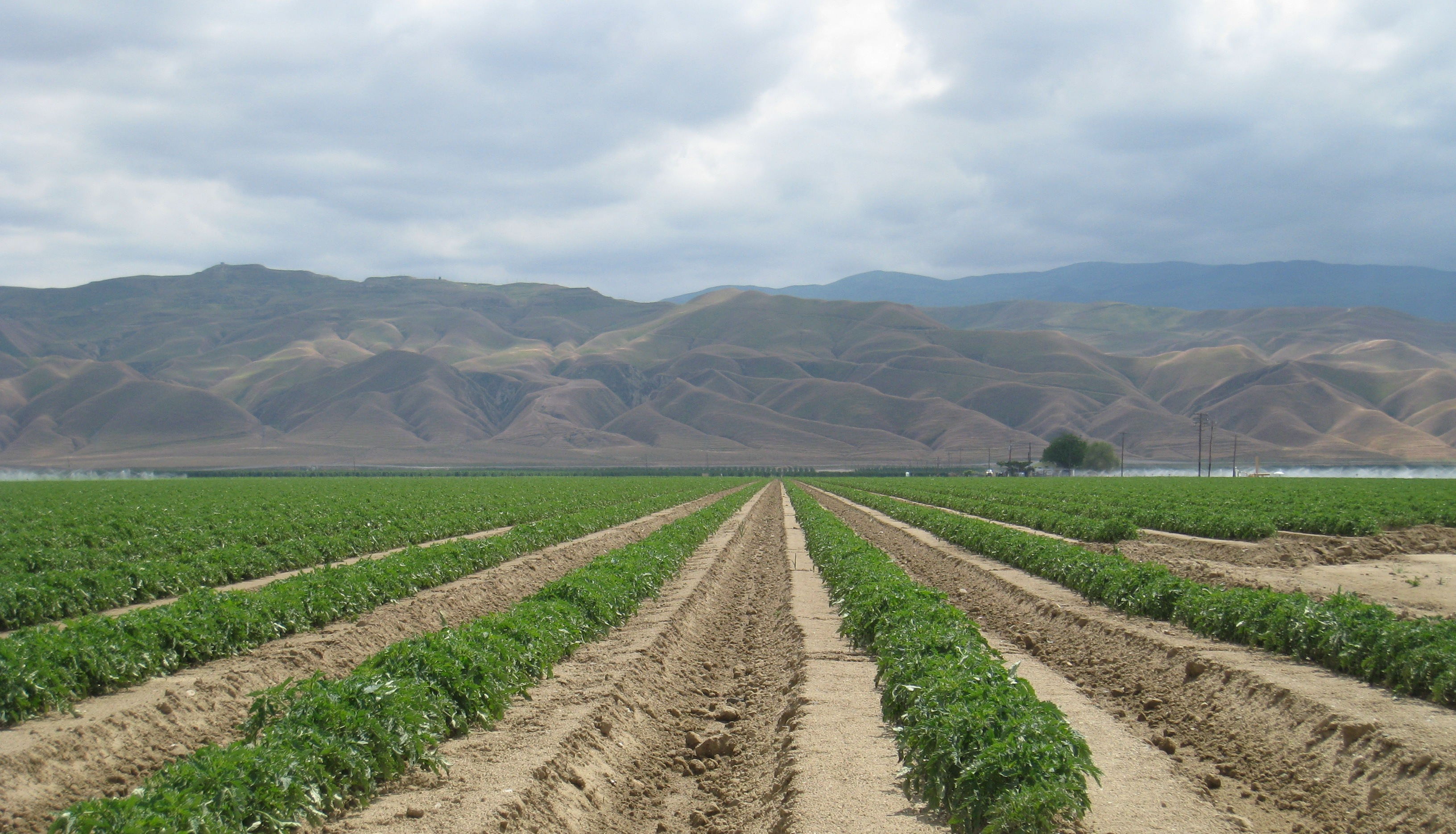 Views on Food: Outsmarting the Drought
