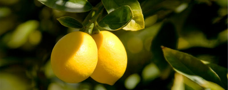 U.S.: Limoneira Raises 2014 Income Guidance
