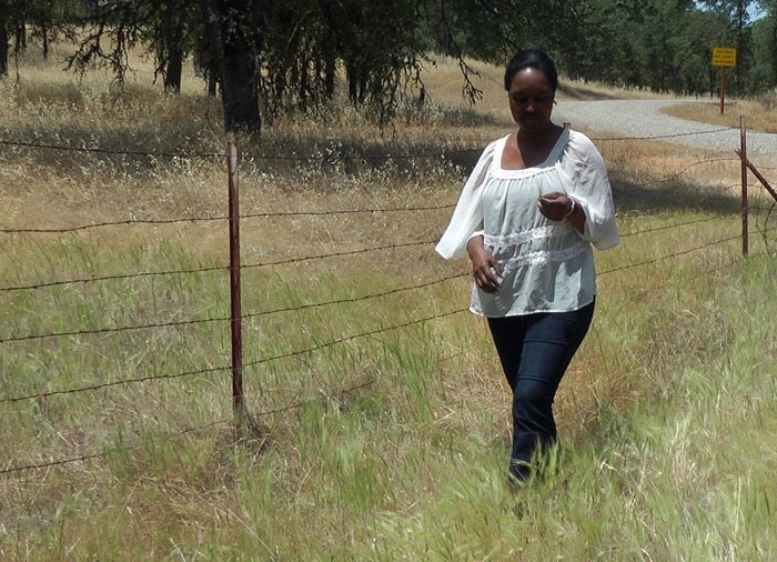 Ranchers Concerned About Invasion of Medusahead Weed on Foothill Rangeland