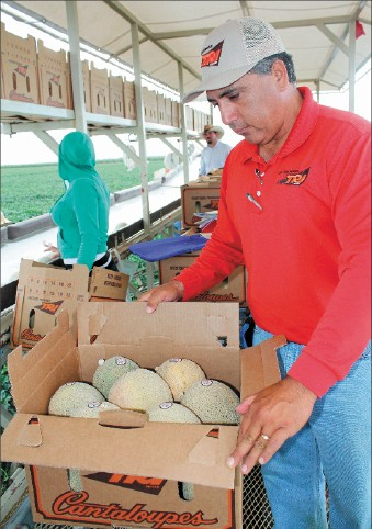 Water Quantity, Quality Affect Melon Crops