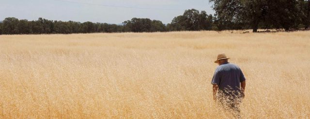 Drought lessons from a sheep rancher