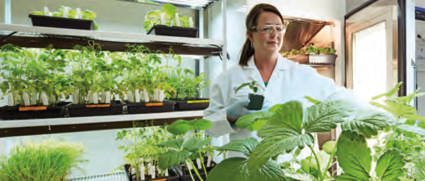 Bayer CropScience Offers Biologic 'Serenade' to Fight Pests