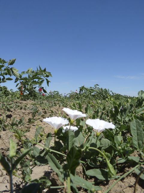 USDA to Help Farmers Diversify Weed Control Efforts