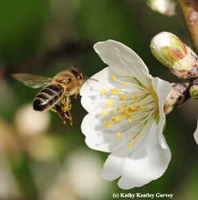 UC Davis Wins Debate Refuting Neonicotinoid Ban