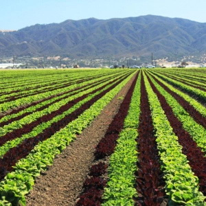 Op-ed: California Agriculture Is Worth the Water