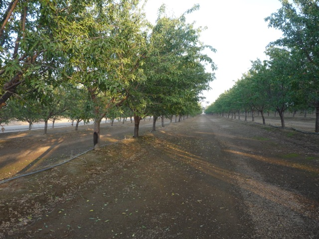 Good News for Oakdale Irrigation District Farmers