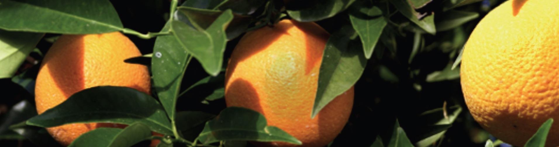LA Declares Citrus Matters TODAY