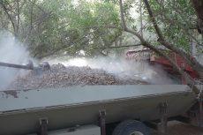 almond nut harvest safety
