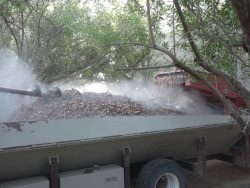 almond nut harvest safety
