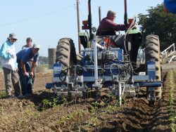 Mechanical Weeding Would Help Veg Industry