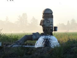 Select Growers Asked to Remediate Nitrates in Water