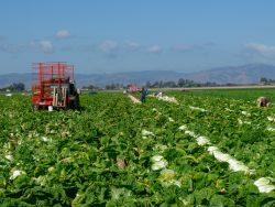 California agriculture, Agvocacy