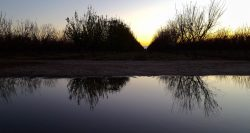 Almond Irrigation Tips
