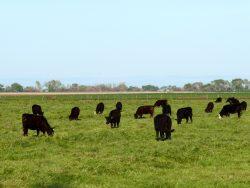 Livestock economics
