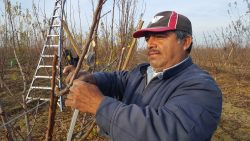 Farm Workers Fearful for Future