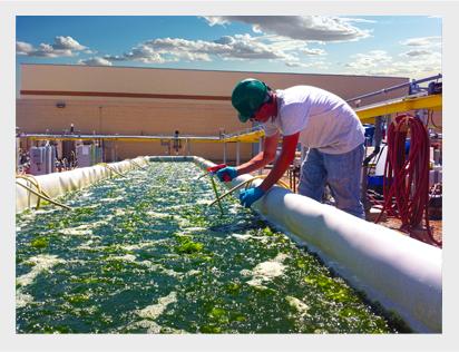 microalgae Pond, Heliae Development, LLC.