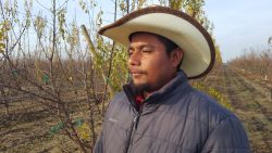 Conflict of Interest Between ALRB and UFW