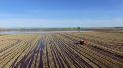 California Rice Growers are Model of Environmental Stewardship