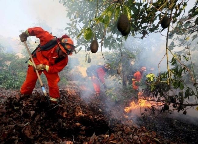 fire damage on avocado trees