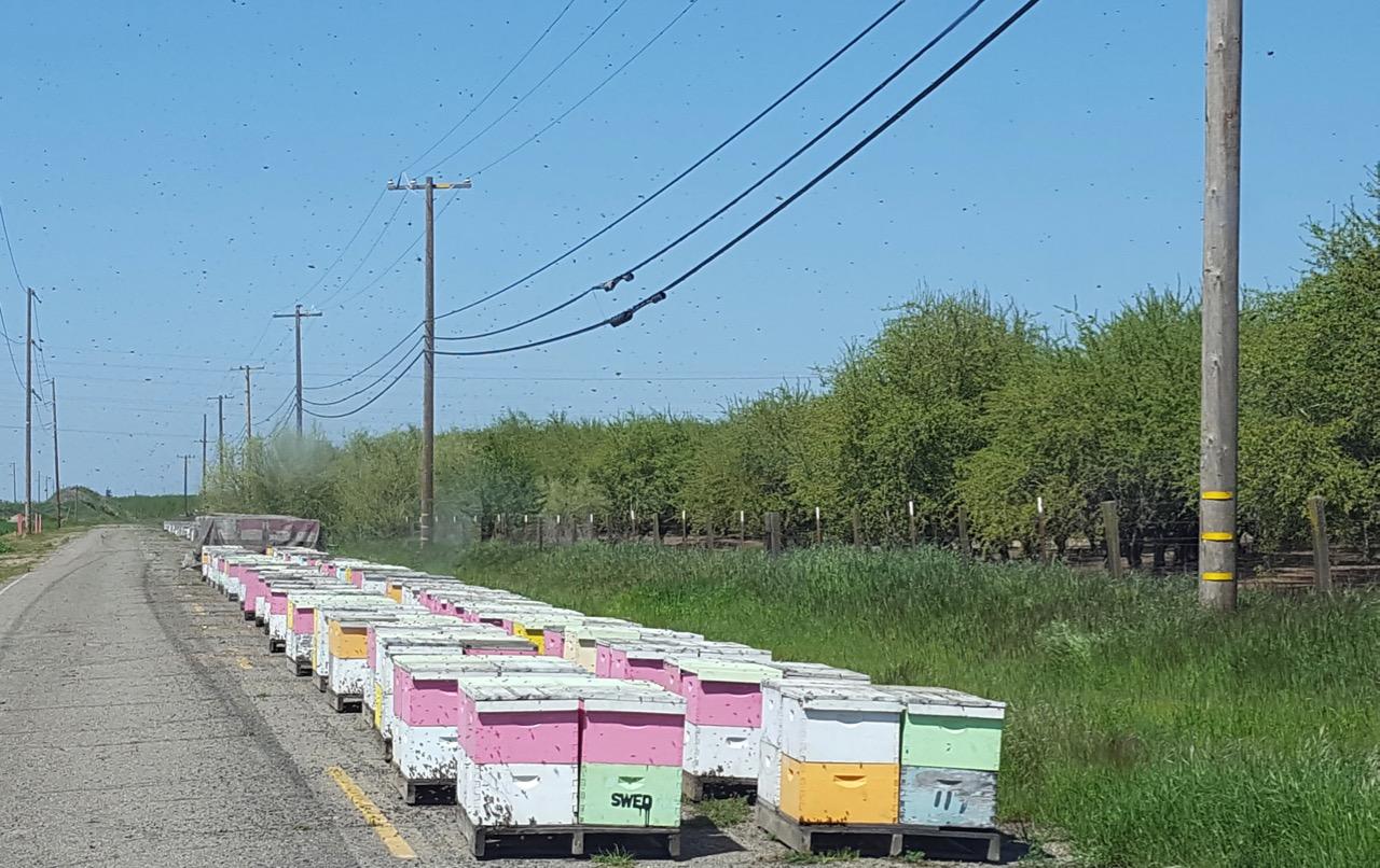 registration of hives