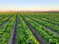 Important Leafy Greens Webinar Scheduled for May 14
