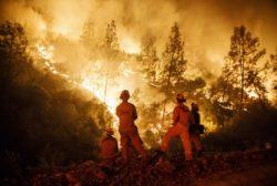 Wildfire Smoke Damaging Many Crops