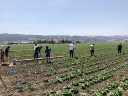 Stop 4 Bills Affecting Farm Employment Law