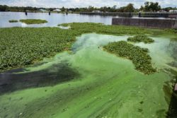 Wastewater Treatment Plant in Delta Causing Problems