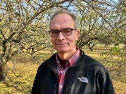 Be Aware of Yield Robbing Ants in Almond Orchards