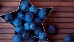 Blueberry Harvest Wraps Up