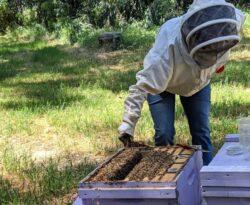 Amy Hustead is First Master Beekeeper