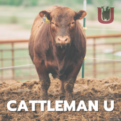 Cattleman U: Virtual Education for Cattle Producers