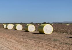 Important Cotton Grower Webinars Scheduled