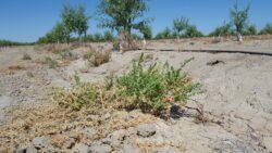Jose Dias A New UCANR Agronomy/Weed Advisor