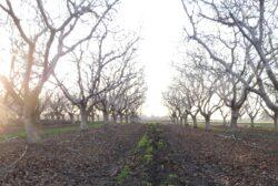 Tree Dormancy Explained