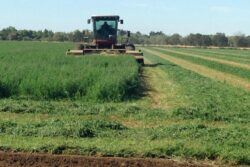 Organic Alfalfa Cost Study Available